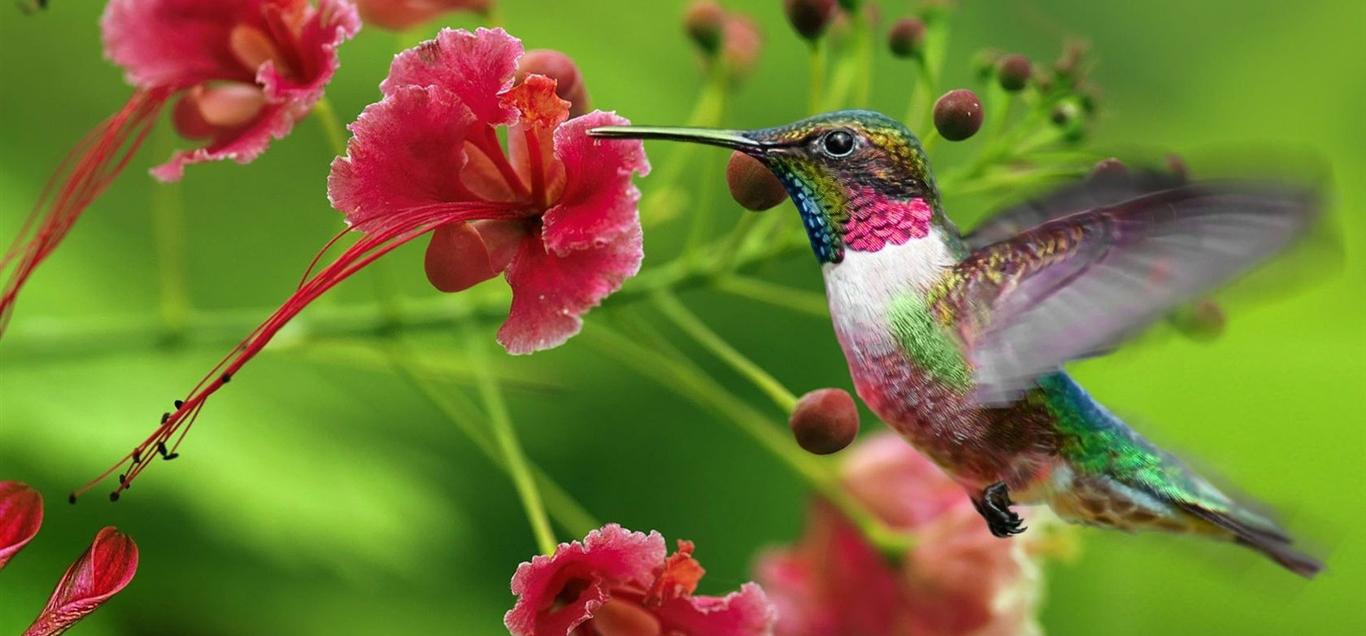 Colibri Creation